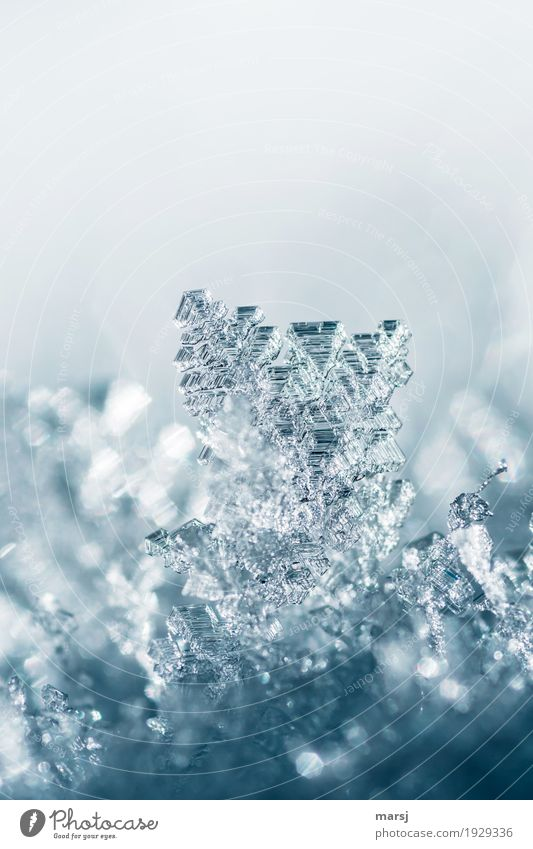Only in a great climate can these crystals grow. Life Harmonious Calm Winter Snow Nature Ice Frost Glittering Illuminate Exceptional Thin Authentic Sharp-edged