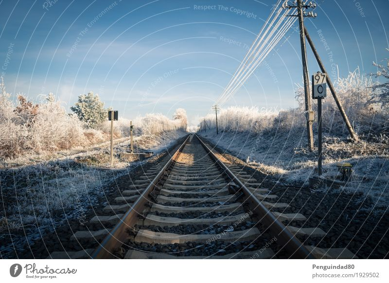 Straight forward... Vacation & Travel Trip Far-off places Winter Snow Railroad tracks Transport Means of transport Traffic infrastructure Train travel Road sign