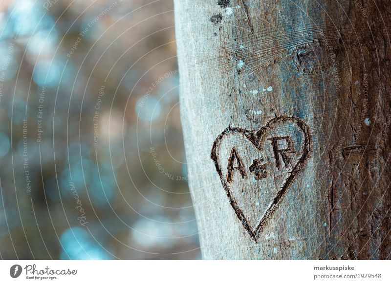 Heart declaration of love Adventure Far-off places Freedom Mountain Hiking Nature Plant Animal Sun Autumn Tree Leaf Blossom Agricultural crop Tree trunk Sign
