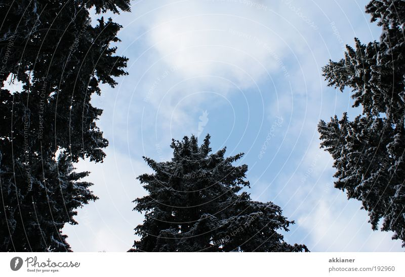 Nature Sky Tree Plant Winter Clouds Forest Dark Cold Snow Park Air Ice Bright Weather Environment