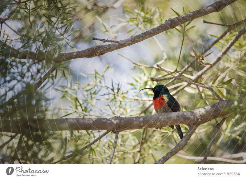 Nature Vacation & Travel Summer Sun Tree Animal Far-off places Forest Environment Small Garden Freedom Bird Tourism Park Trip