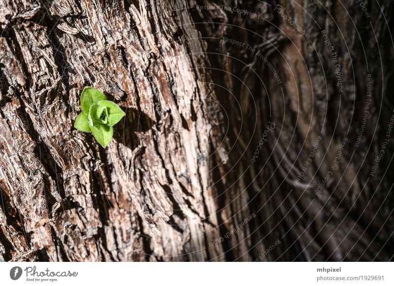 newbie Nature Spring Plant Tree Leaf Foliage plant Wood Growth Power Colour photo Exterior shot Close-up Detail Structures and shapes Day Contrast