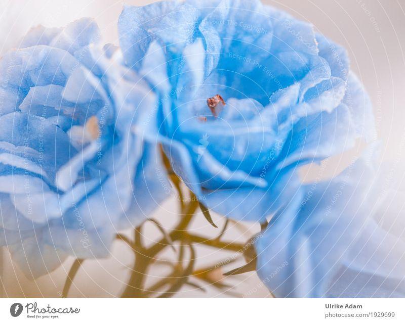 Nature Plant Blue Beautiful Flower Warmth Blossom Interior design Spring Art Exceptional Decoration Elegant Blossoming Soft Card