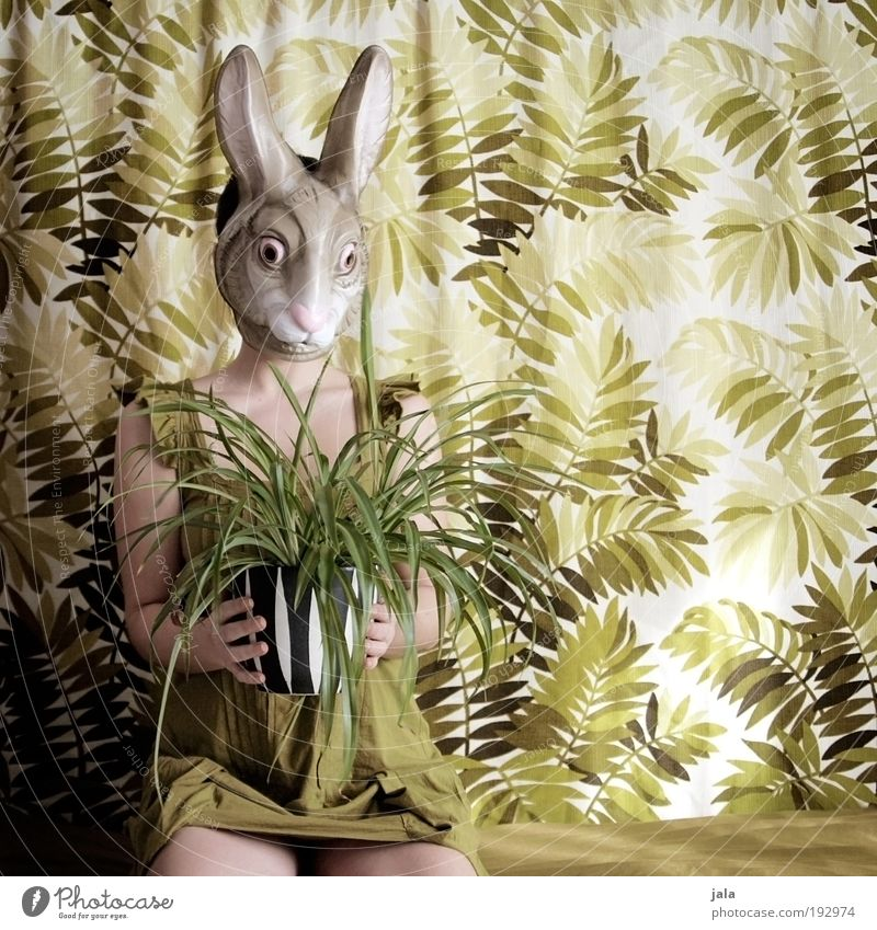Woman Human being Green Plant Feminine Funny Adults Sit Easter Mask Hare & Rabbit & Bunny Light Carnival costume Foliage plant Portrait photograph