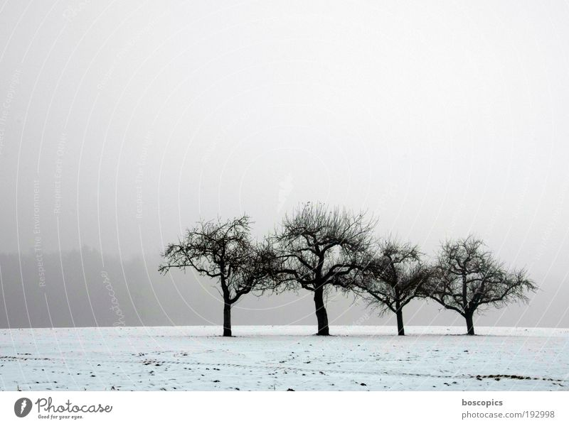the lonely four Landscape Sky Winter Fog Ice Frost Snow Tree Field Blue Gray White Loneliness Peace Cold Environment Subdued colour Exterior shot Deserted