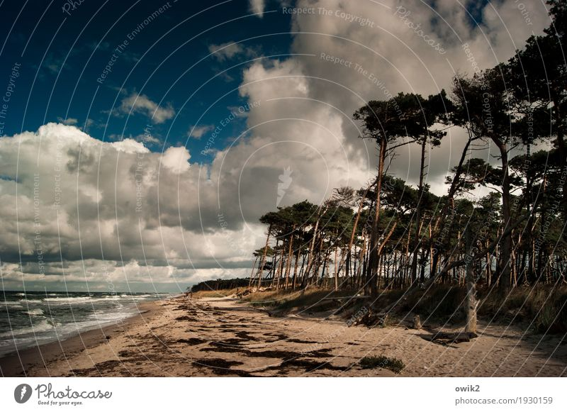 Sky Nature Plant Water Tree Landscape Clouds Far-off places Beach Environment Autumn Coast Movement Grass Freedom Horizon