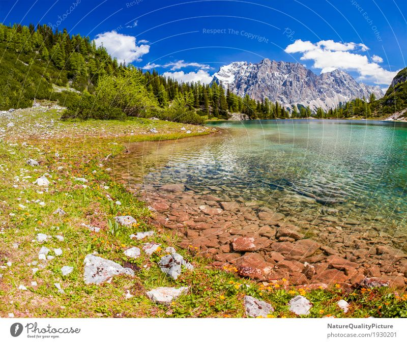 Human being Woman Nature Vacation & Travel Plant Summer Water Landscape Relaxation Animal Calm Far-off places Beach Forest Mountain Adults