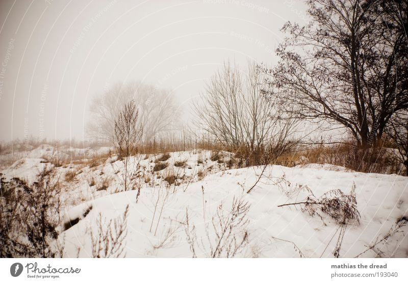 Nature Tree Plant Winter Forest Dark Cold Snow Meadow Grass Landscape Ice Field Dirty Fog Environment