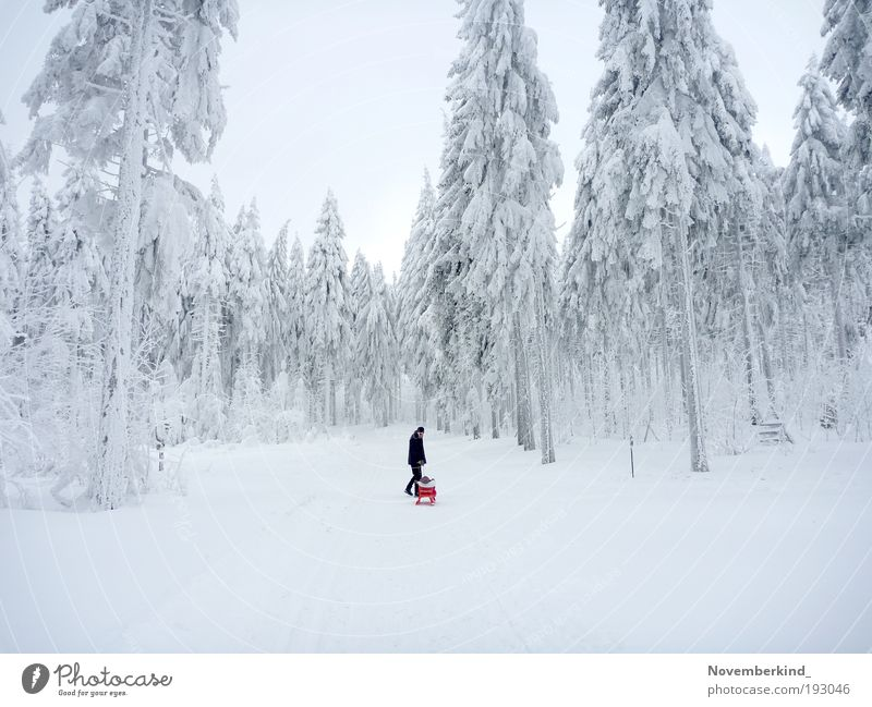 blank wood Nature Sky White Tree Winter Forest Snow Relaxation Movement Landscape Ice Bright Moody Together Glittering Going