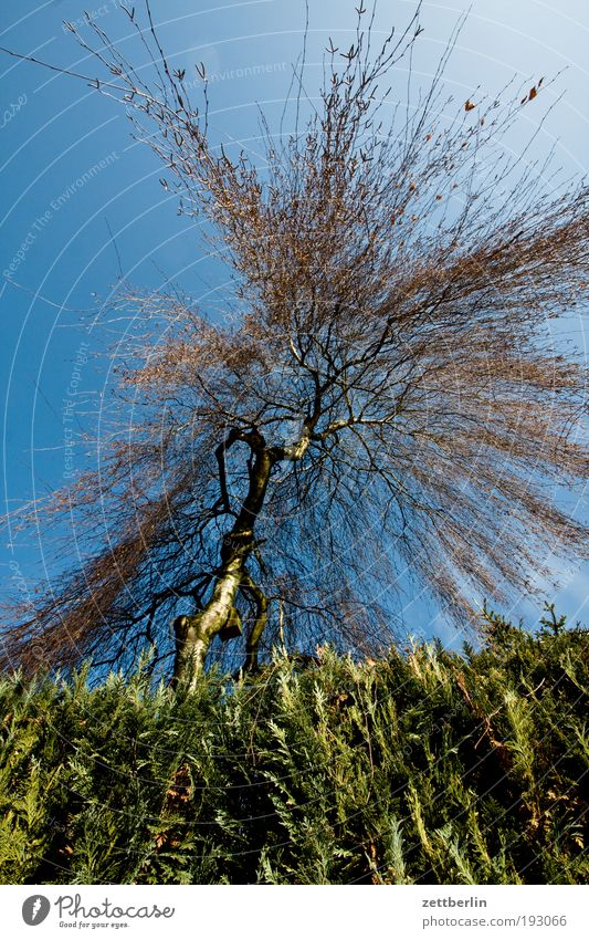 Sky Nature Blue Tree Garden Park Branch Tree trunk Twig Dynamics Steep Blue sky Neighbor Explosion Hedge Sky blue