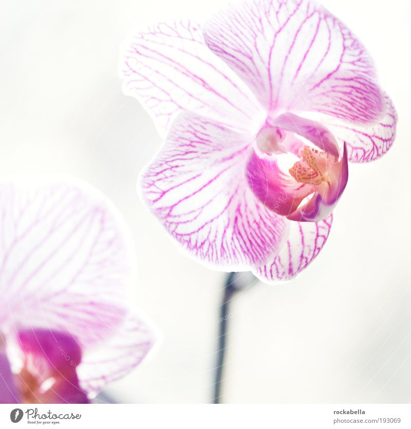 Beautiful Calm Relaxation Life Cold Style Contentment Elegant Esthetic Uniqueness Pure Flower Fragrance Well-being Harmonious Orchid