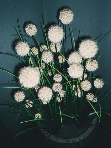 planeten wachstum Nature Plant Bushes Exotic Happy zimmerpflanze flauschig rund golf blau grün erwachsen künstlich Colour photo