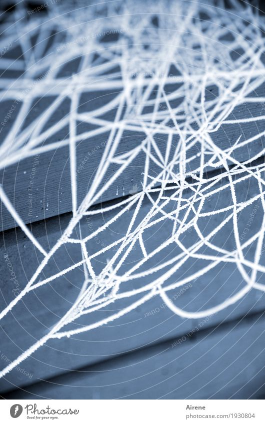 web Winter Ice Frost Spider's web Cobwebby Wood Freeze Exceptional Cold Blue White Bizarre Frozen Hoar frost Spin Net Muddled Colour photo Exterior shot Detail