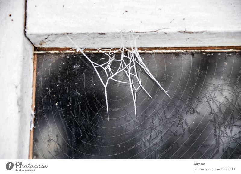 Fight the cleaning mania! Living or residing Redecorate Cellar Attic Window frame Winter Ice Frost Wood Glass Net Network Cobwebby Spider's web Freeze Old Dirty