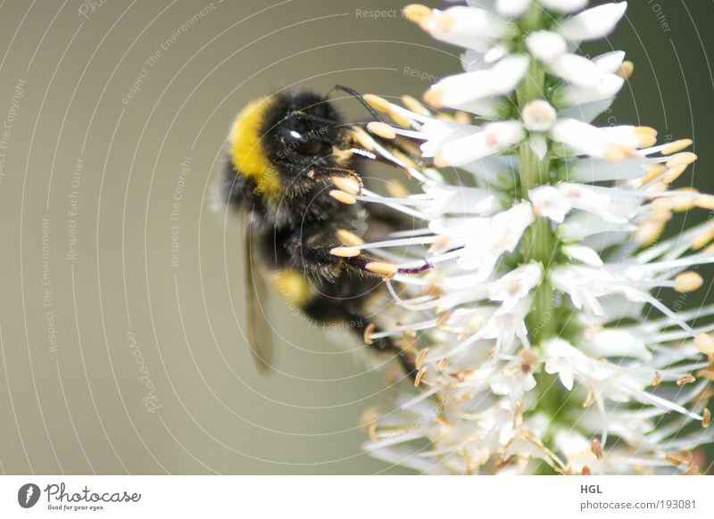 Nature Flower Animal Environment Bumble bee
