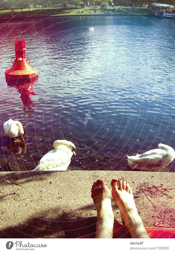 sunny feet Lifestyle Relaxation Swimming & Bathing City trip Summer Sun Sunbathing Feet Park River Berlin Capital city Swan Water To enjoy Lie Warmth