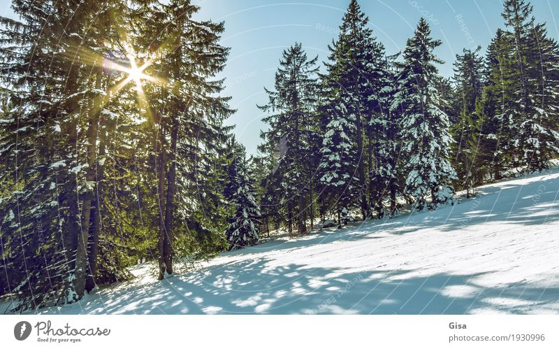 Sunrays fall through the branches of the spruces. Lifestyle Skiing Snowboarding Snow hiking Tourism Trip Adventure Freedom Winter Nature Landscape Sunlight