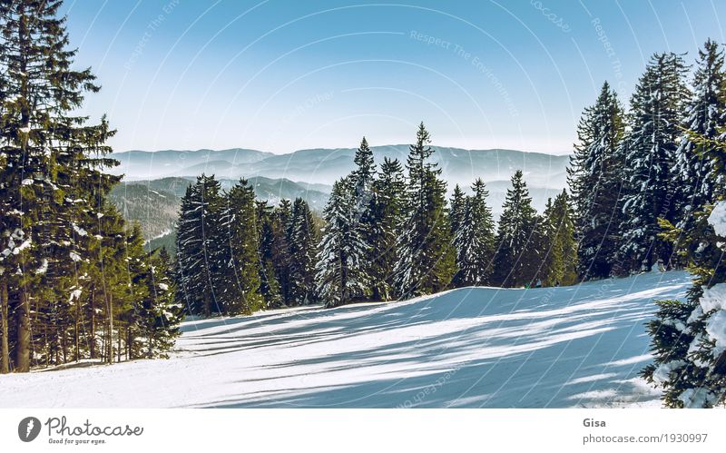 View from the Unterberg to the foothills of the Alps Snow hiking Skiing Winter Landscape Mountain Hill Looking Fresh Clean Blue Green Tourism Blue sky Austria