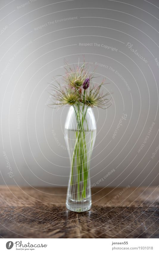 chives Design Vase Plant Flower Blossom Blossoming Green Colour photo Studio shot Close-up Deserted Copy Space top