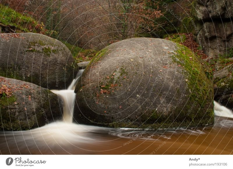 La mare aux sangliers Vacation & Travel Tourism Trip Far-off places France Brittany Finistere Huelgoat Nature Landscape Water Autumn Brook Waterfall Stone Brown