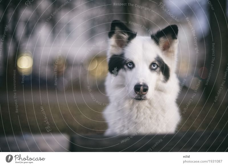 Hello Lifestyle Leisure and hobbies Town House (Residential Structure) Animal Pet Dog 1 Observe Looking Wait Esthetic Exceptional Elegant White Attentive