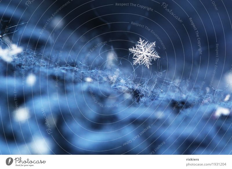 Nature Blue Beautiful White Winter Environment Cold Natural Snow Small Exceptional Snowfall Glittering Ice Esthetic Frost