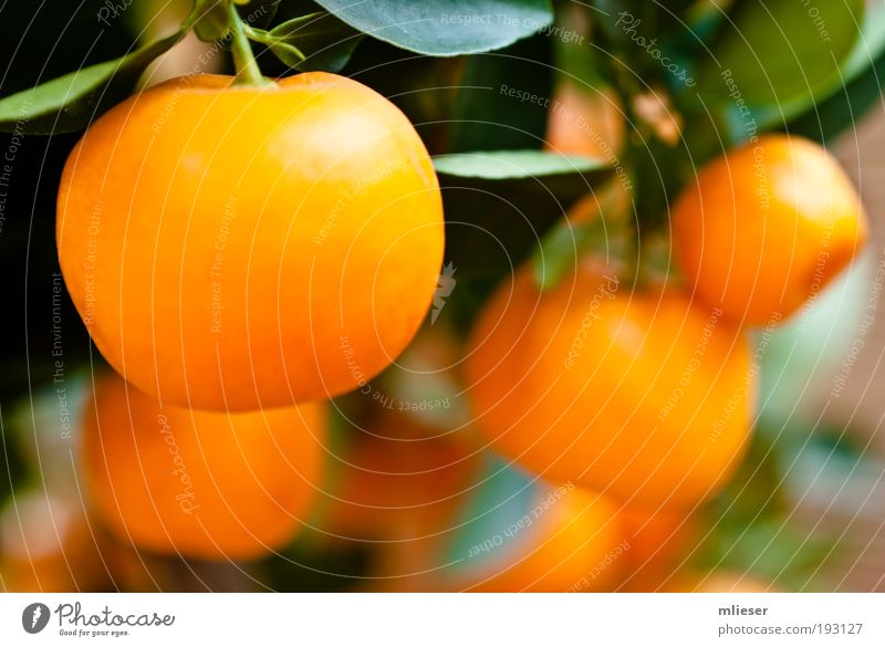 Green Yellow Fruit Many Delicious Stalk Citrus fruits Tangerine Tropical fruits Blur