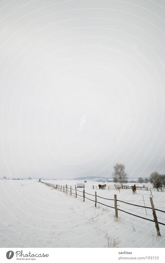 I want summer Landscape Winter Ice Frost Snow Bushes Meadow Field Animal Horse Freeze Cold Gray White To console Patient Calm Boredom Sadness Reluctance