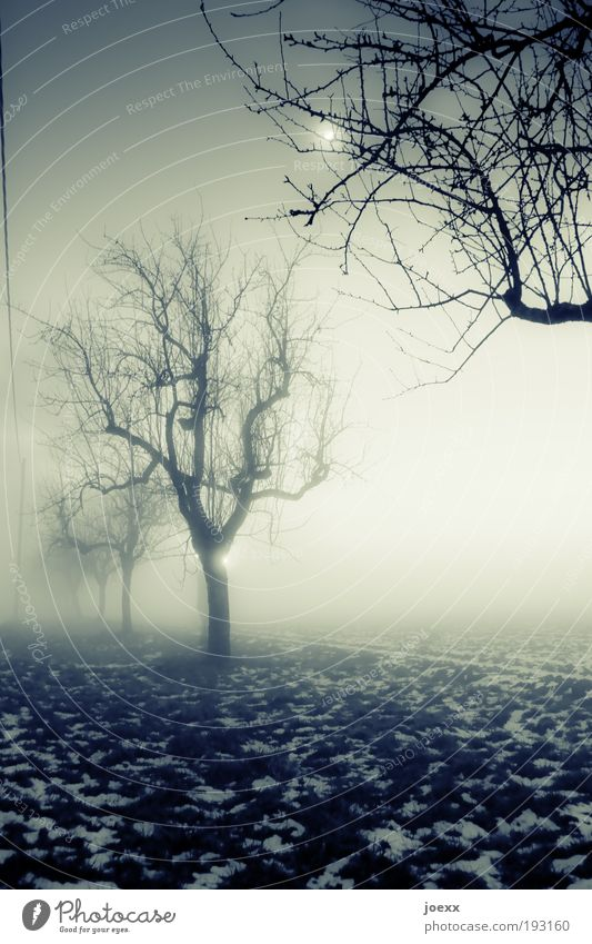 Rendezvous in the moonlight Nature Moon Winter Bad weather Fog Ice Frost Snow Tree Garden Field Old Dark Creepy Cold Green Fear Calm Moody Row of trees
