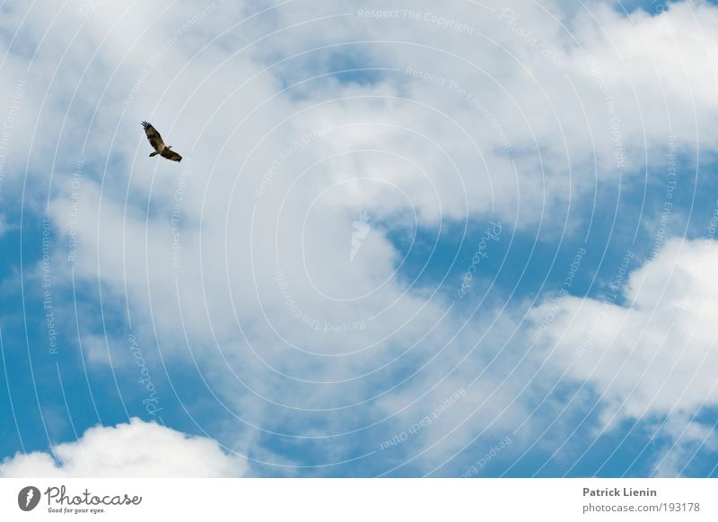 Nature Sky White Ocean Blue Summer Beach Vacation & Travel Clouds Animal Above Freedom Air Bird Coast Flying