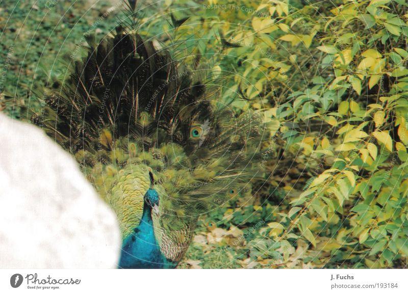 Animal Stone Bird Bushes Feather Perplexed Audacious