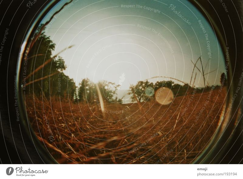 Dried in summer Plant Earth Cloudless sky Sun Sunlight Summer Straw Field Warmth Yellow Analog Fisheye Colour photo Exterior shot Lomography Day Sunbeam