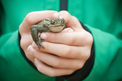 The world belongs in children's hands Human being Child Infancy Life Hand Jacket Animal Wild animal Frog Animal face To hold on Looking Green Brave Curiosity