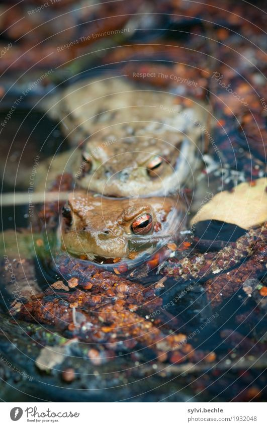 """""""Two Shank"""" Harmonious Well-being Contentment Swimming & Bathing Environment Nature Plant Animal Water Spring Lakeside Pond Wild animal Frog 2 Pair of animals"""