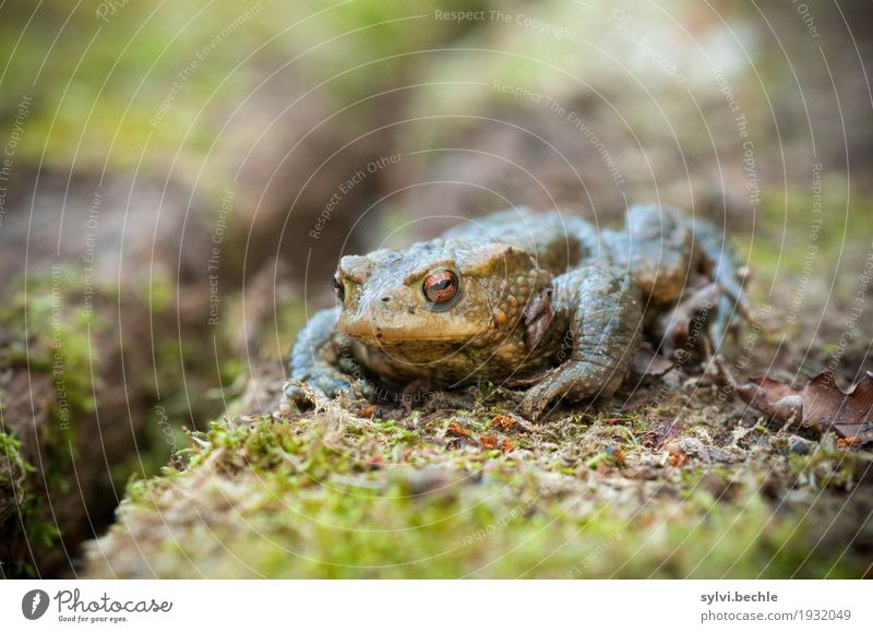 worm's-eye view Environment Nature Animal Spring Plant Moss Wild animal Frog Animal face 1 Wood Observe Relaxation Sit Wait Hideous Slimy Brown Green