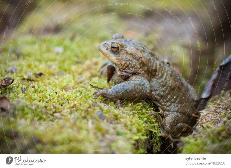 short break Environment Nature Plant Animal Spring Climate Moss Wild animal Frog 1 Wood Looking Sit Brown Green Attentive Watchfulness Calm Exhaustion