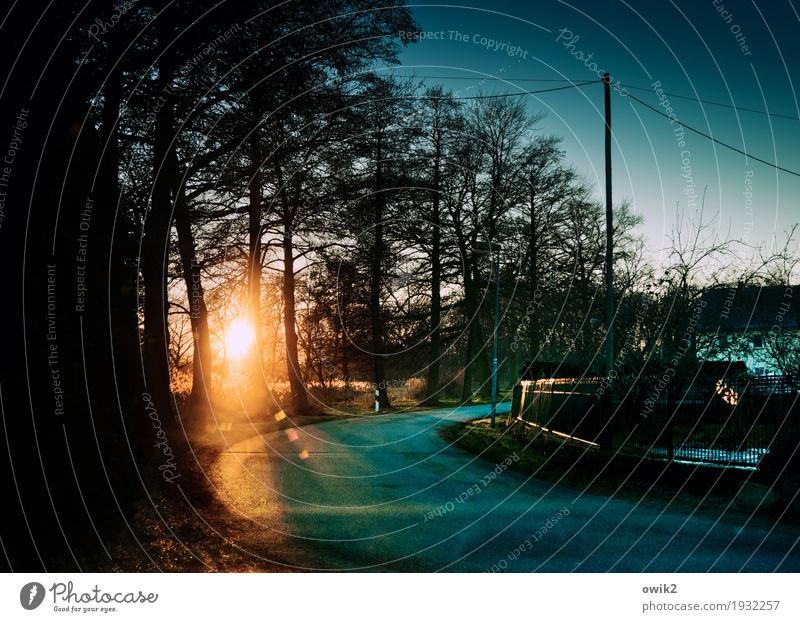 A piece of eternity Environment Nature Landscape Cloudless sky Winter Ice Frost Tree Bushes Village Traffic infrastructure Street Curve Street lighting