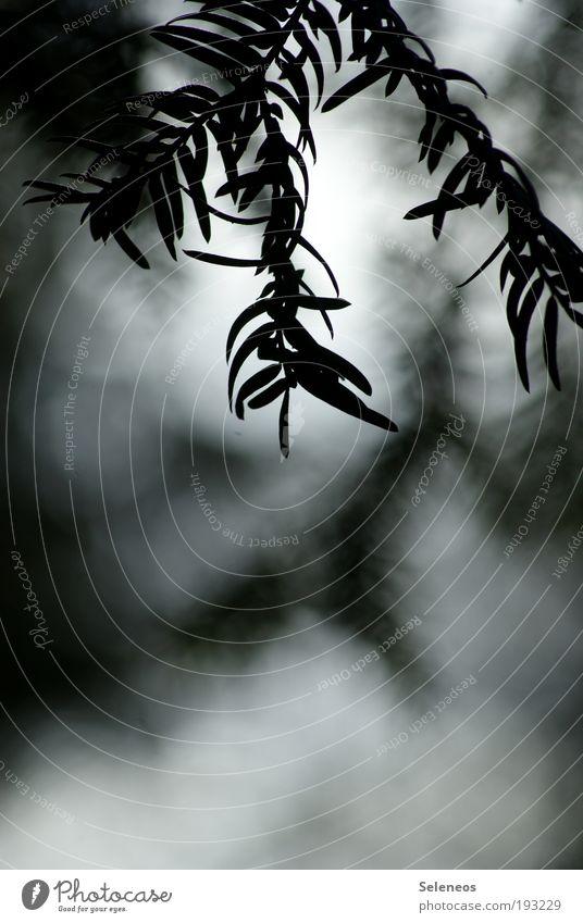 Nature Sky Tree Sun Plant Leaf Loneliness Dark Cold Park Landscape Air Weather Environment Esthetic
