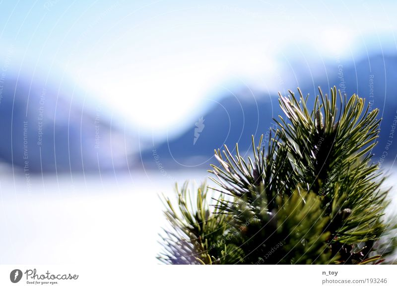 winter ends Nature Landscape Water Sunlight Winter Beautiful weather Ice Frost Snow Tree Bushes Alps Mountain Snowcapped peak Lake Breathe Observe Discover
