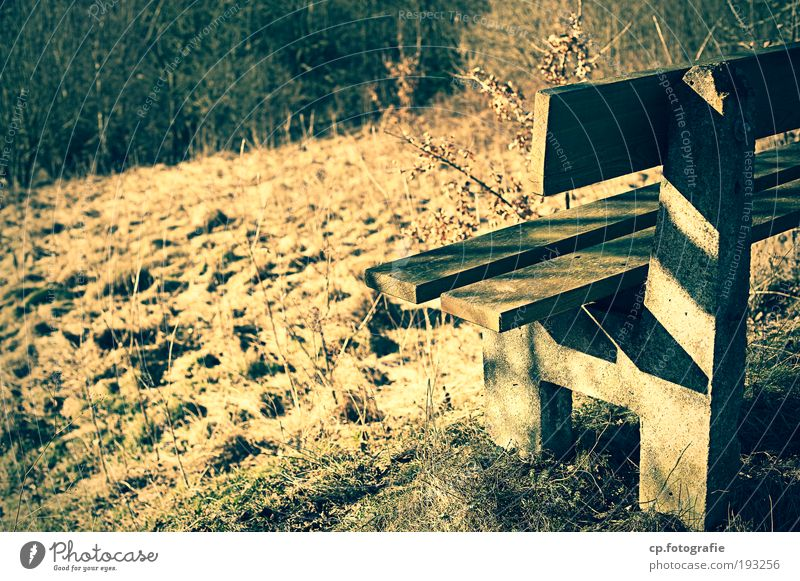 Nature Loneliness Forest Meadow Contentment Hiking Bench Warm-heartedness Hill End Beautiful weather Footpath Joie de vivre (Vitality) Retirement Exhaustion