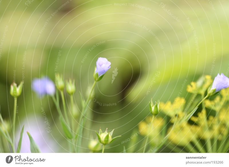 Nature Flower Green Blue Plant Summer Leaf Yellow Colour Life Blossom Grass Fresh Happiness Thin