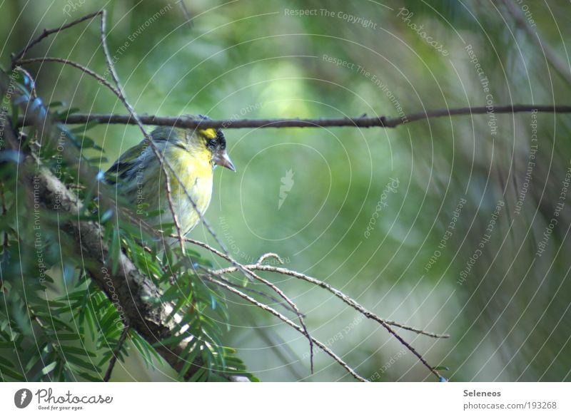 Nature Tree Plant Leaf Calm Animal Environment Landscape Garden Park Bird Wild Climate Wing Observe Animal face