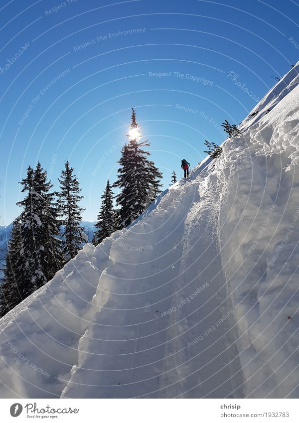 on track Leisure and hobbies Ski tour Adventure Freedom Sun Winter Snow Nature Landscape Sky Cloudless sky Sunlight Beautiful weather Tree Relaxation Sports