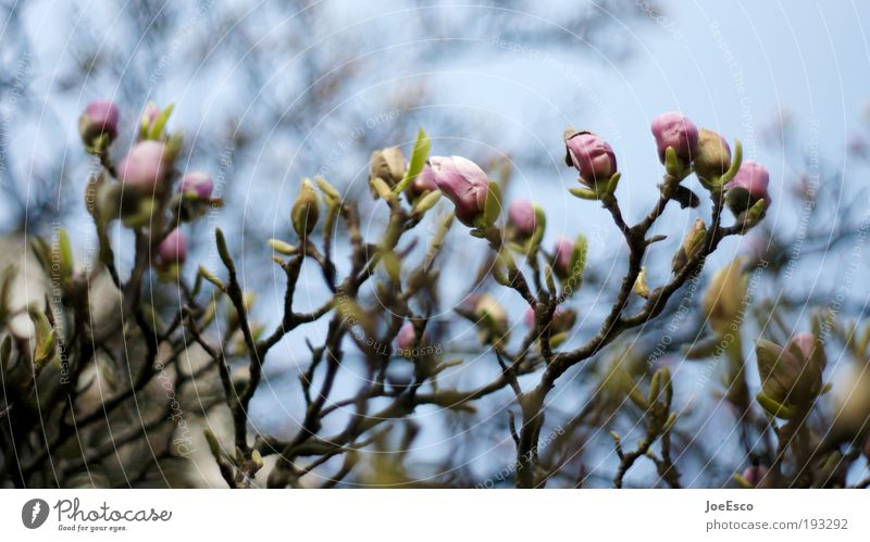Beautiful Sky Tree Plant Leaf Blossom Spring Park Growth Kitsch Blossoming Gardening Spring fever Peony