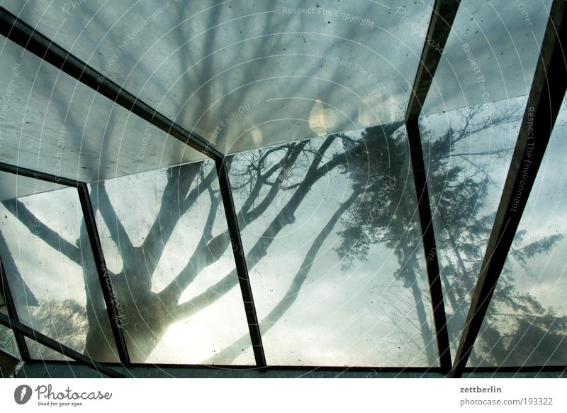Tree Glass Weather Roof Protection Branch Umbrella Weather protection Sunshade Tree trunk Umbrellas & Shades Twig Nature Building Acrylic Glass roof