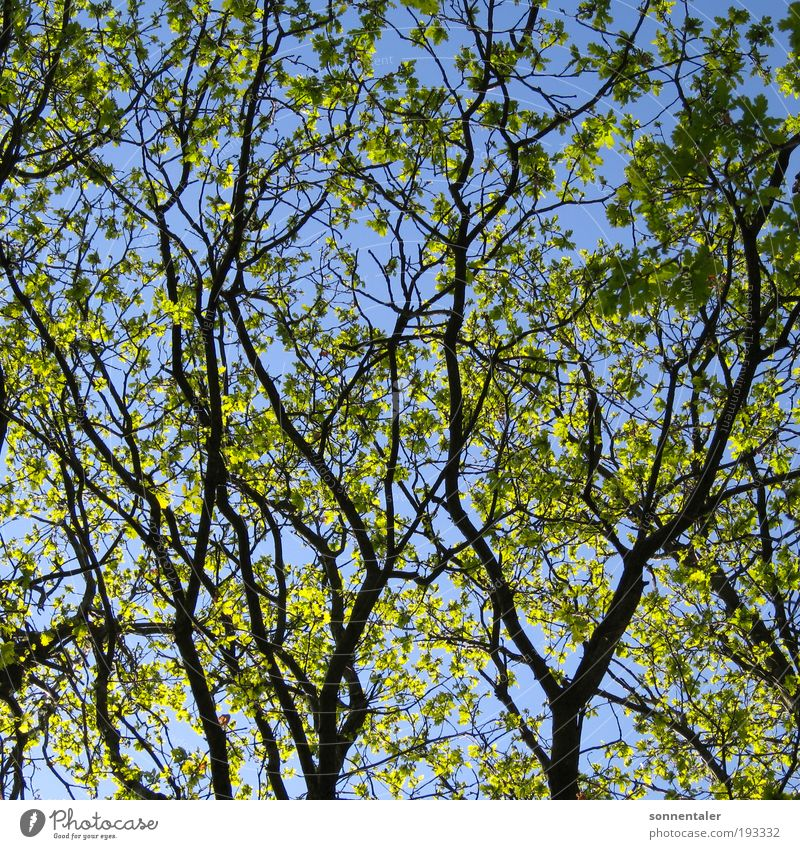 Nature Sky Tree Sun Green Blue Plant Summer Leaf Forest Life Spring Dream Park Power Growth