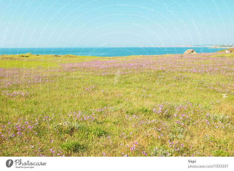Green grass on the field with flowers Summer Environment Nature Landscape Plant Water Sky Cloudless sky Horizon Sunlight Spring Beautiful weather Flower Grass