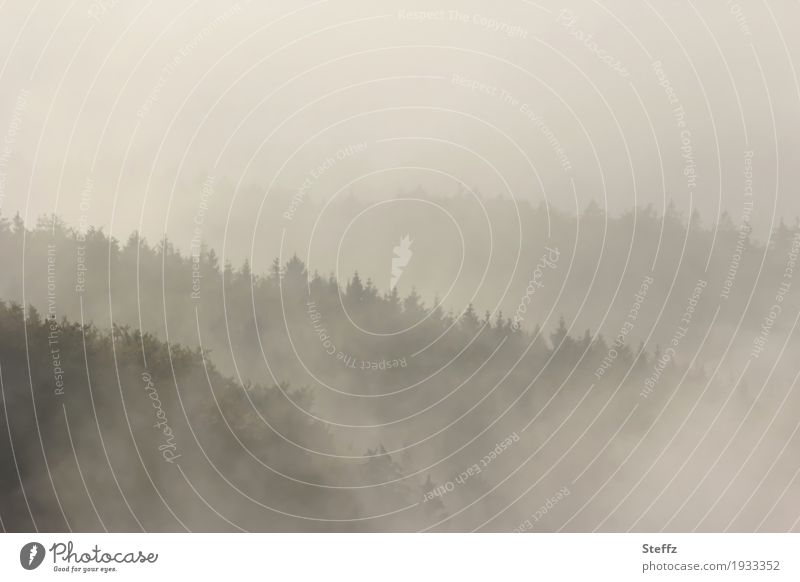 Nature Beautiful Tree Landscape Calm Forest Environment Gray Earth Moody Horizon Weather Fog Air Climate Hill