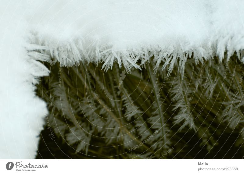 general conditions Environment Nature Winter Climate Climate change Ice Frost Snow Crystal Cold Natural Corner Frame framed Bordered Multilayered Level