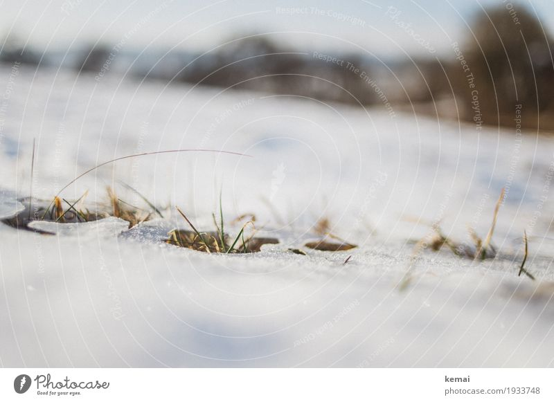 Remains II Freedom Environment Nature Plant Spring Winter Beautiful weather Ice Frost Snow Grass Foliage plant Meadow Growth Authentic Bright Natural Thaw